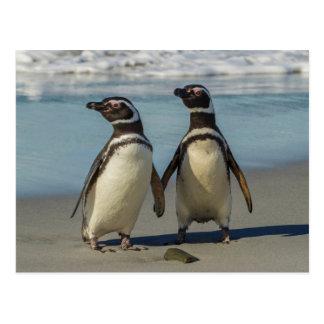 Postal Pares de pingüinos en la playa