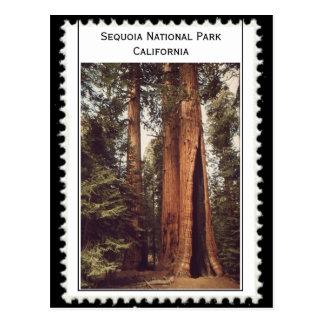 Postal Parque nacional California de secoya