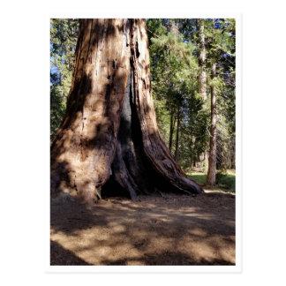 Postal Parque nacional de secoya: Canículas
