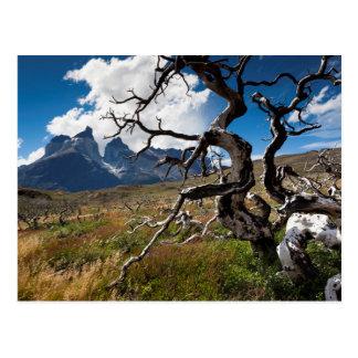 Postal Parque nacional de Torres del Paine, árboles
