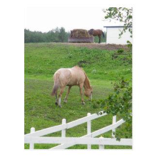 Postal Pasto de caballos
