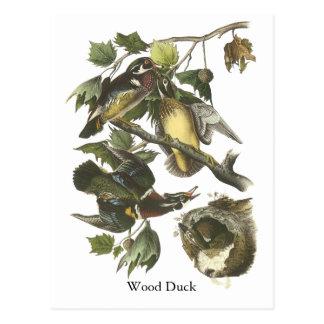 Postal Pato de madera, Juan Audubon