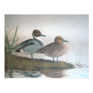Postal Patos del pato rojizo