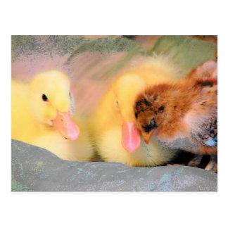 Postal Patos y polluelo del dibujo animado