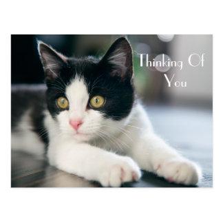 """Postal """"Pensamiento dulce en usted"""" saludo del gatito del"""