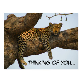 Postal Pensamiento en usted (leopardo en un árbol)