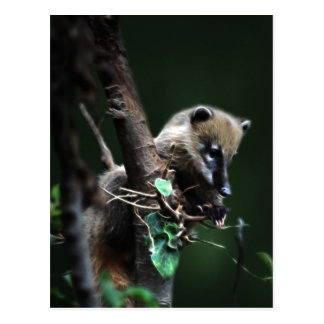 Postal Pequeño coati de los bribones - lemur