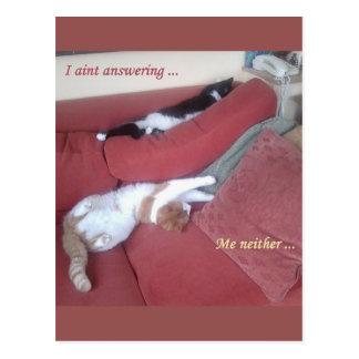 Postal perezosa de la diversión de los gatos -