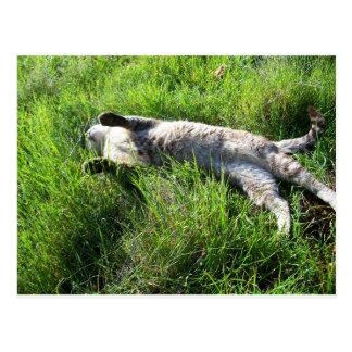 Postal perezosa del gato