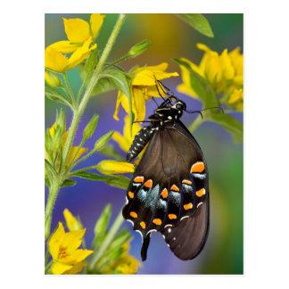 Postal Perfil de la mariposa en la flor amarilla