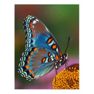 Postal Perfil de la mariposa en una flor