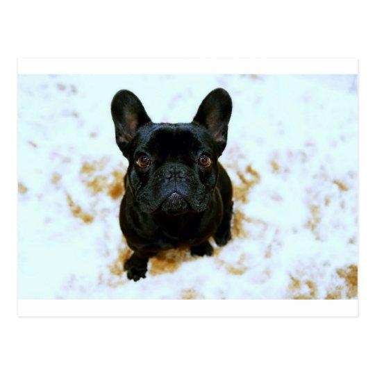 Postal ¡Perrito adorable del dogo francés!