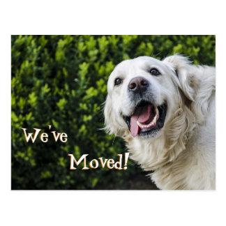 Postal Perrito del golden retriever hemos movido la nueva