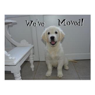 Postal Perrito del perro perdiguero hemos movido la nueva
