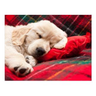 Postal Perrito el dormir en la tela escocesa