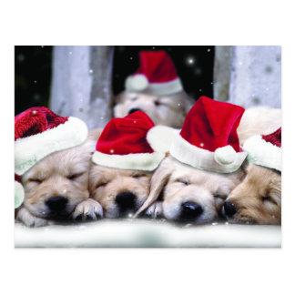Postal Perritos lindos de Labrador con los gorras de