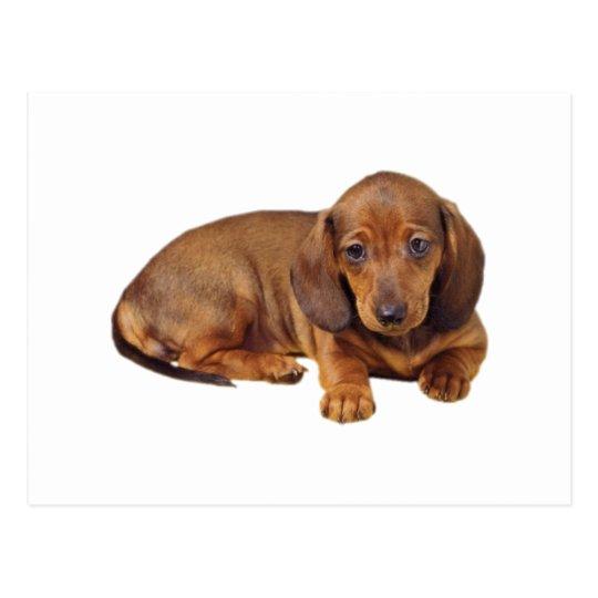 Postal Perro basset