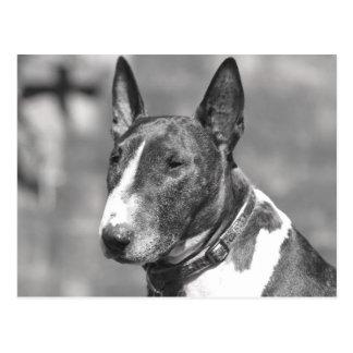 Postal Perro de bull terrier