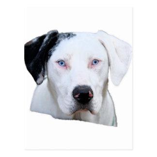 Postal Perro de caza de Catahoula