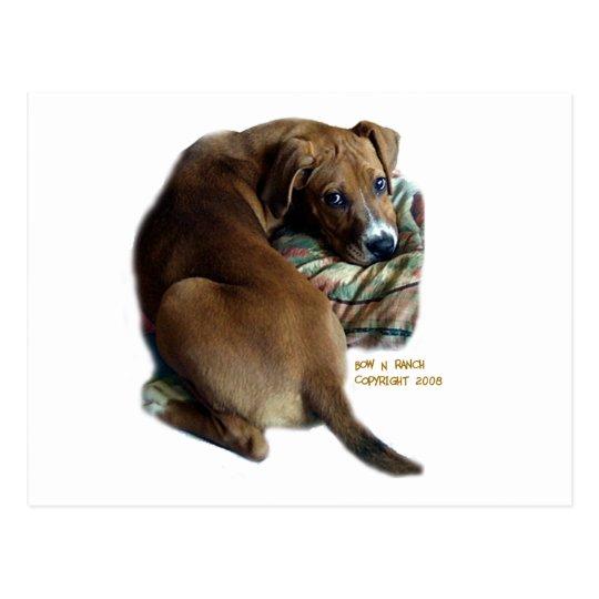 Postal Perro de caza triste