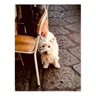 Postal Perro de FullSizeRender 18Shy