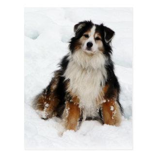 Postal Perro de pastor australiano en nieve