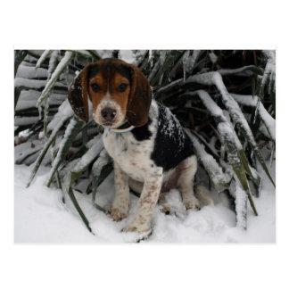 Postal Perro de perrito Snoopy lindo del beagle en nieve