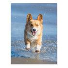 Postal Perro del Corgi Galés del Pembroke que corre en la