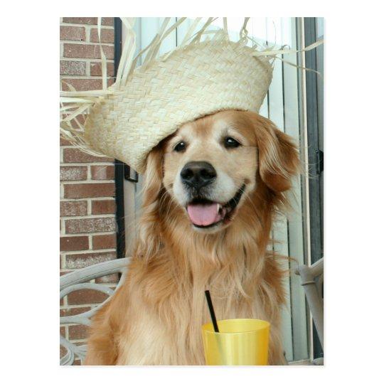 Postal Perro del golden retriever en verano feliz del