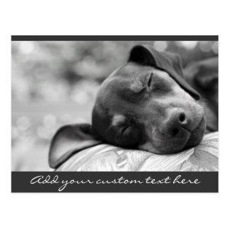 Postal Perro del Pinscher miniatura el dormir