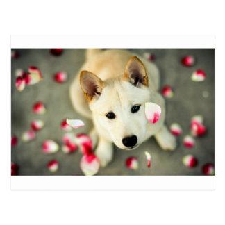Postal Perro lindo