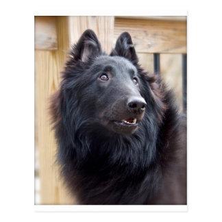 Postal Perro pastor belga