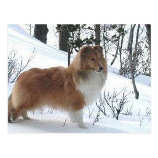 Postal perro pastor de Shetland