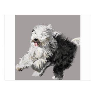 "Postal ¡Perro pastor inglés viejo - ""llegando! """