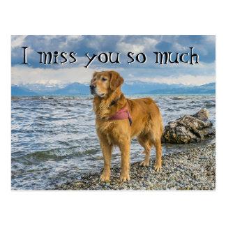 Postal Perro perdiguero en la falta de la playa usted