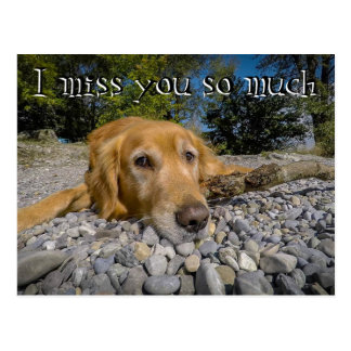 Postal Perro perdiguero en la playa rocosa. He estado