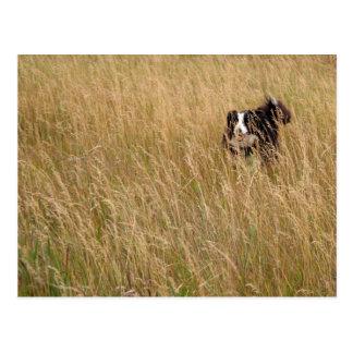 Postal Perro que corre a través de hierba