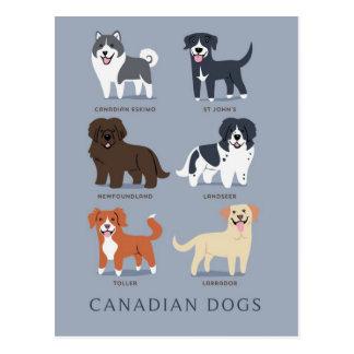 Postal Perros canadienses