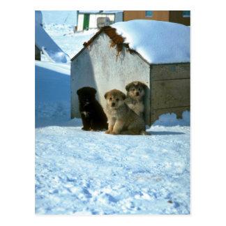 Postal Perros de trineo del bebé, Groenlandia