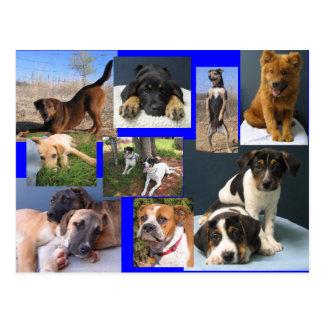 Postal Perros del refugio para animales de OKC