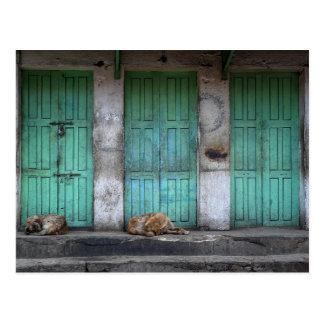 Postal Perros perdidos delante de puertas verdes sucias