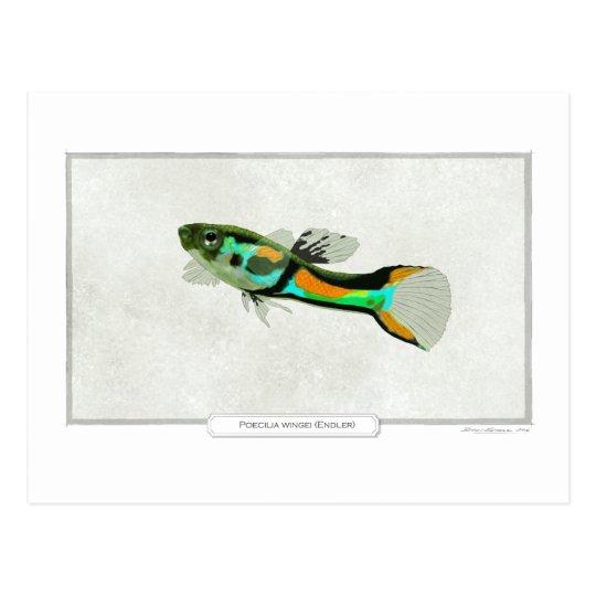 Postal Pescados de Endler