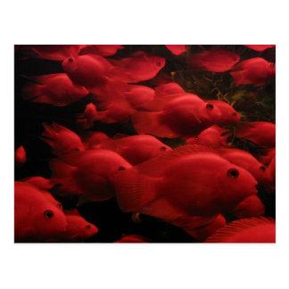 Postal Pescados rojos