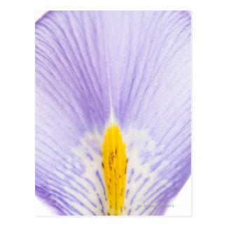 Postal Pétalo del iris