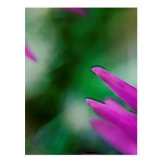 Postal Pétalos rosados del cactus
