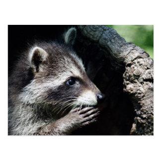 Postal Petición del mapache