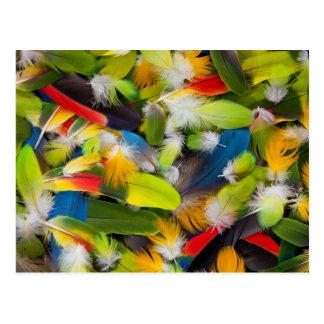 Postal Pila de plumas coloridas