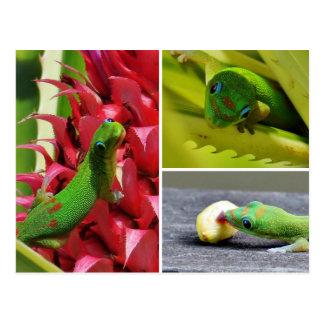 Postal Piña linda Hawaii del rosa del gecko del día del