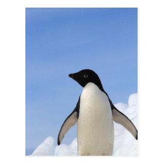 Postal Pingüino de Adelie