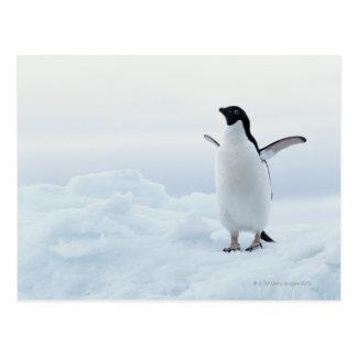 Postal Pingüino de Adelie, la Antártida